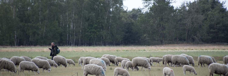Wandelen en fietsen door de prachtige natuurgebieden in de Regio-Maasduinen – Noord-Limburg